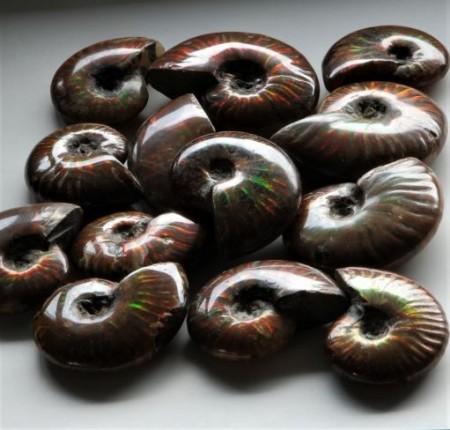 Ammonitter med perlemorglans